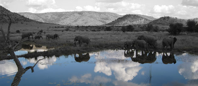 Pilanesberg National Park - South Africa - Transition Zone Between the Kalahari and Wetter Lowveld